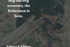 edward_abbey